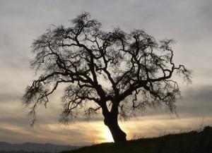 kaballah, mysticism, tree